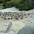Day_2_cape_point_and_penguin_visit_48